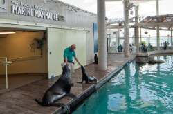 Seal Training at New England Aquarium Boston